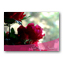 Magenta Flowers Get Well  Cards